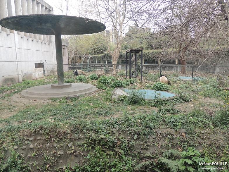 Zoo de chengdu 2015 for Zoo exterieur
