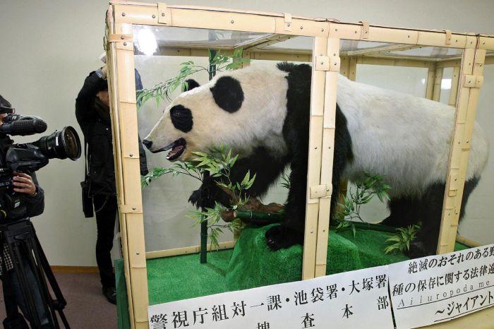 14 d cembre 2011 arrestation au japon d 39 un homme accus de vouloir vendre un grand panda empaill. Black Bedroom Furniture Sets. Home Design Ideas