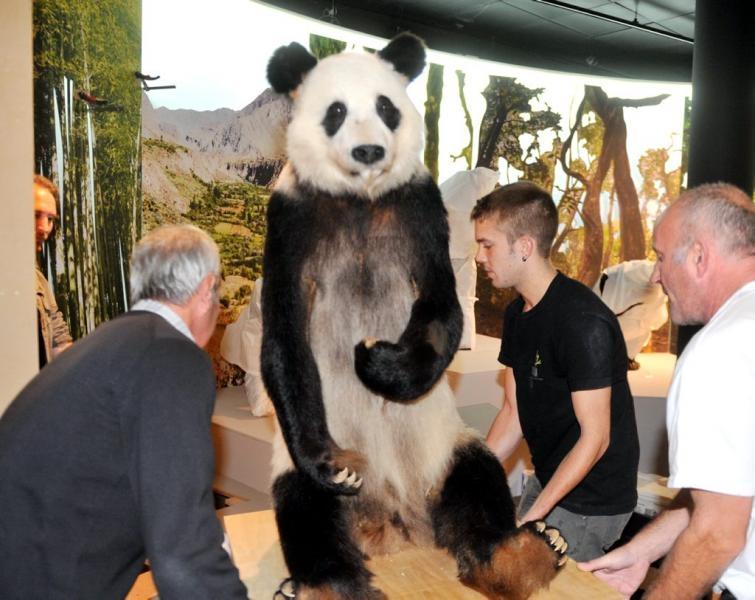 3 octobre 2013 le panda yen yen ayant v cu au zoo de vincennes expos toulouse. Black Bedroom Furniture Sets. Home Design Ideas